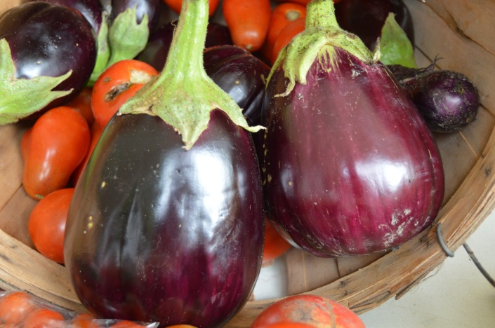 Easy-to-make eggplant recipes for you and your family